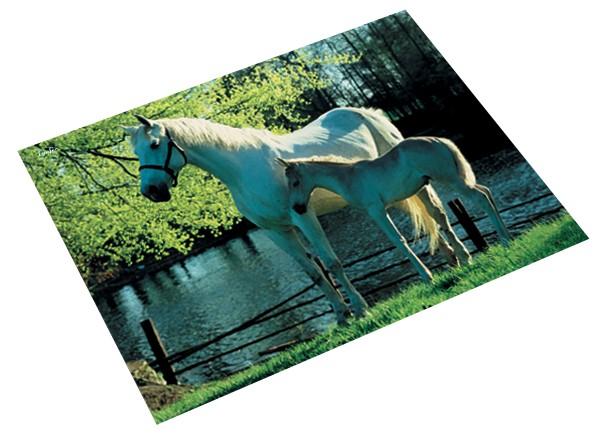 Läufer Schreibunterlage Pferd & Fohlen am See, 400 x 530 mm